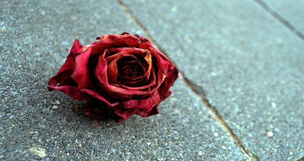 dead_rose_ii_by_bleeding__roses-d361qjg