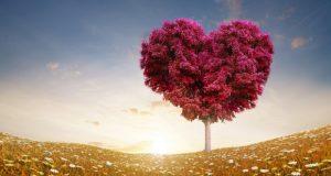 love_heart_tree_fields-2880x1800