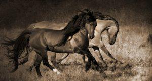 photos_of_wild_horses0002