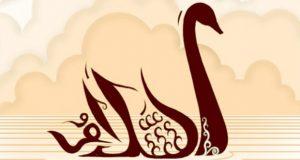 salam-bird