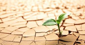 seedling dry